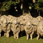 Glentanner-Farm-013