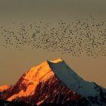 Aoraki Mount Cook Sunset from Glentanner