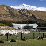 Glentanner Sheep Yards Glentanner Station Aoraki Mt Cook NZ